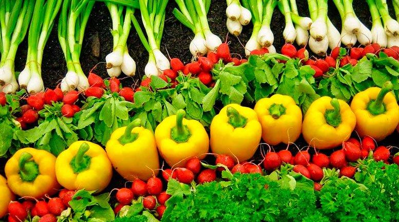 Curso de Gastronomia Agricultura Orgânica